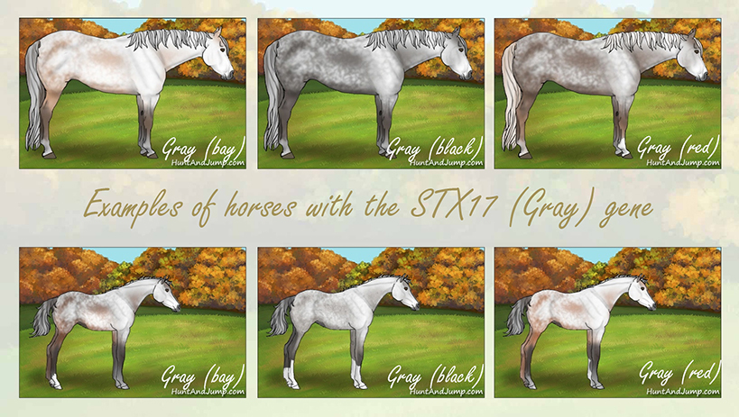 1-STX17