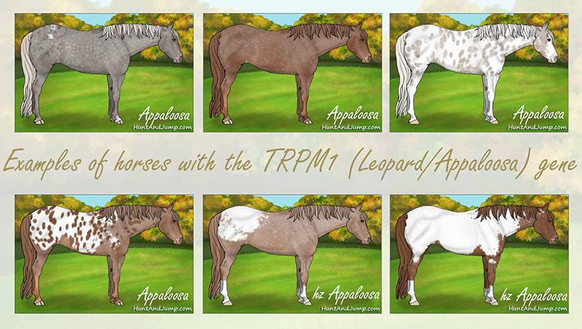 1-TRPM1
